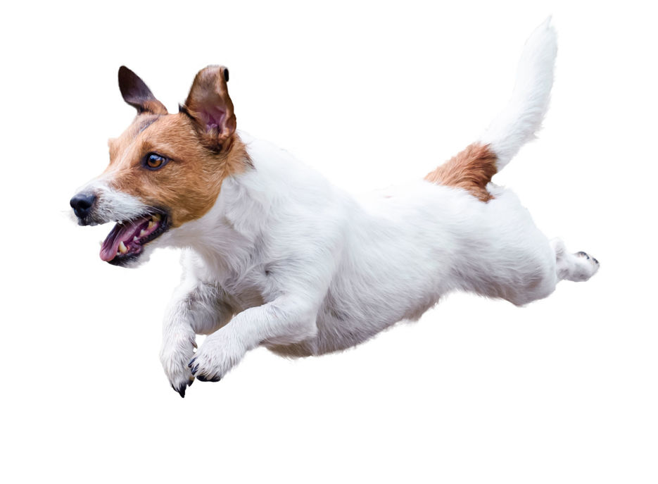 Put the Bounce Back into Your Dog's Pounce